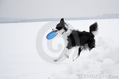 Dog and frisbee
