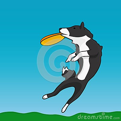 A dog and frisbee