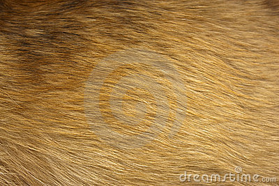 Dog fur close up