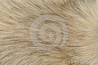 Dog fur closeup