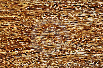Dog fur texture or background. Extreme close view