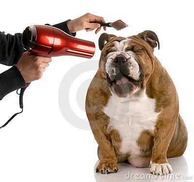 Free Dog Grooming Stock Images - 12391064