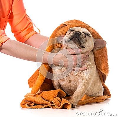 Free Dog Grooming Stock Photo - 40905160