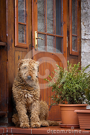 Dog guarding