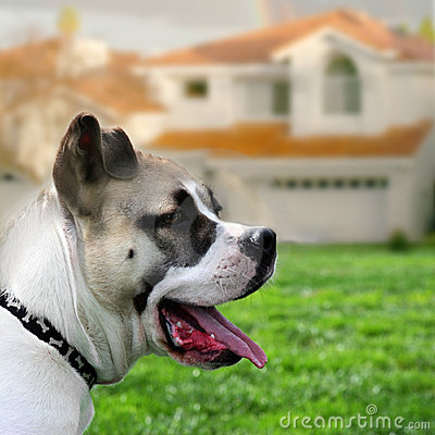 Free Dog Guarding The House Royalty Free Stock Photo - 80085