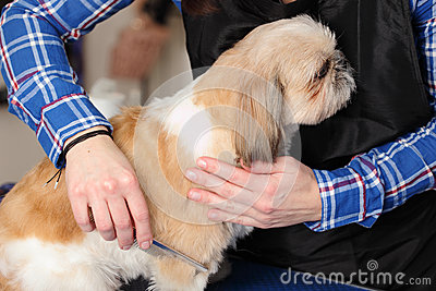 Dog hairdresser, hairstyle, spa for dogs