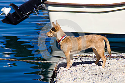 Dog in harbor