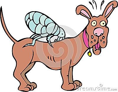 Dog has Fleas