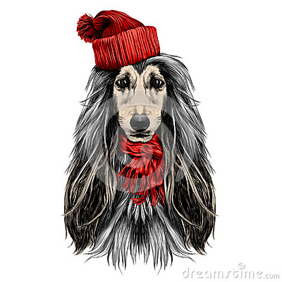 Free Dog Head Full-face Breed Afghan Hound Sketch Vector Royalty Free Stock Images - 95491339