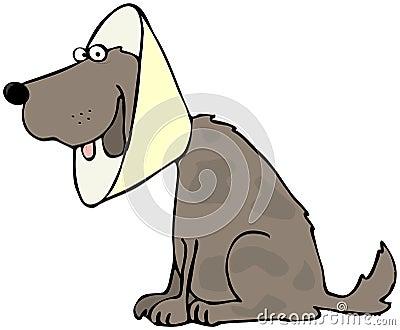 Dog With Head Gear