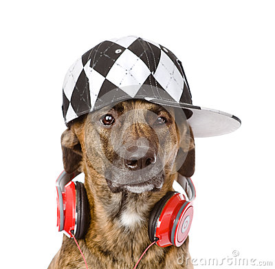 Dog with headphones. isolated on white background Stock Photo