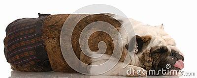 Dog in heat or season