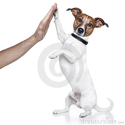 Free Dog High Five Stock Image - 23266451