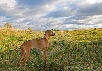 Dog on the hill