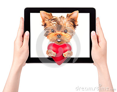 Dog holding heart with tablet computer