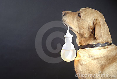 Dog holding a lamp