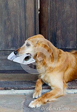 Dog holding newspaper