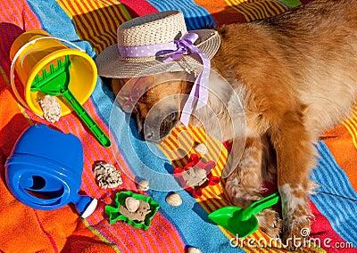 Dog on holidays Stock Photo
