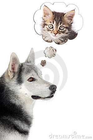 Free Dog Imagining A Cat Stock Photo - 3254300