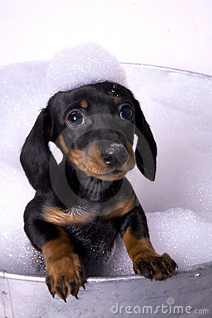 Free Dog In A Bath 5 Royalty Free Stock Image - 8913326