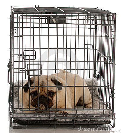 Free Dog In A Wire Crate Stock Image - 10980101