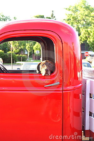 Free Dog In An Old Truck Stock Photo - 5636340