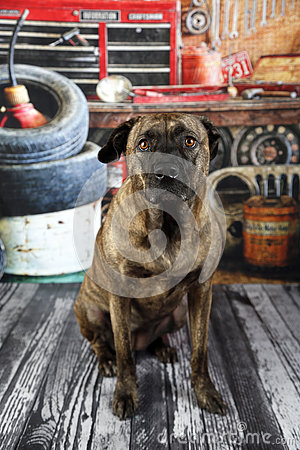 Free Dog In Auto Shop Stock Photos - 79178603