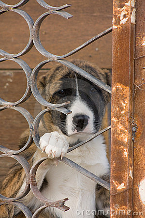 Free Dog In Cage Royalty Free Stock Image - 7427866