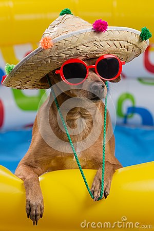 Free Dog In Hat And Glasses In A Bright Inflatable Pool, Concept Of Vacation And Tourism, Close-up Of Shooting Stock Photography - 117382292
