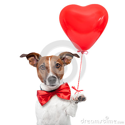 Free Dog In Love Stock Photography - 25217762