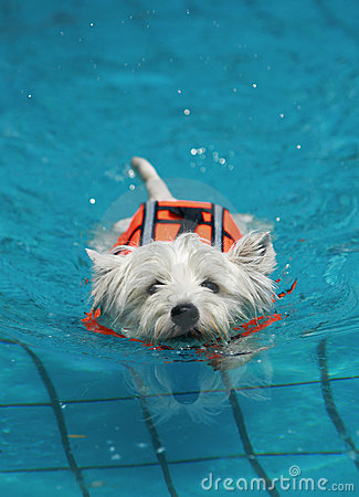 Free Dog In Pool Stock Photo - 5280660