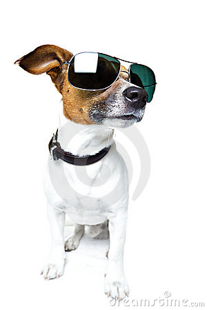 Free Dog In Shades Royalty Free Stock Photography - 23266457