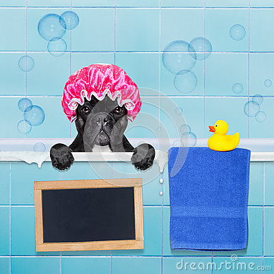 Free Dog In Shower Royalty Free Stock Photography - 64353647
