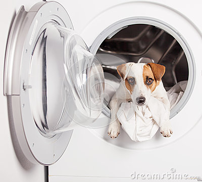 Free Dog In Washer Royalty Free Stock Photos - 75769698