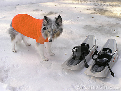 Dog In Its Winter Coat Stock Photos - Image: 69893