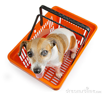 Free Dog Jack Russell Terrier Sitting In A Shopping Cart Royalty Free Stock Image - 45335436