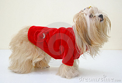 Dog in jacket