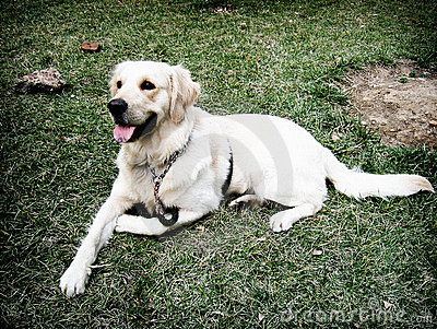 Dog Jimi