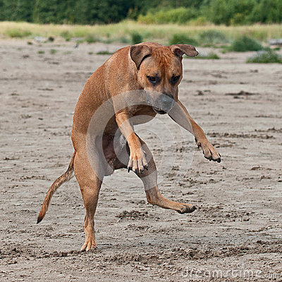 Free Dog Jump On The Beach Stock Photo - 36469970