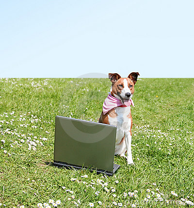 dog with laptop outdoor