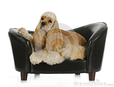 Dog laying on a couch
