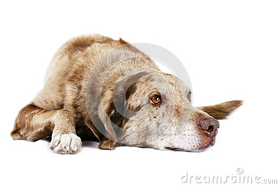 Dog laying down