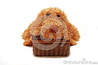 Dog laying on a wattled box