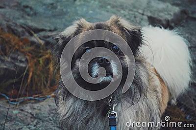 Dog On Leash Outdoors Free Public Domain Cc0 Image