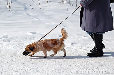 Dog on leash in winter