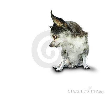 Free Dog Look Stock Images - 3344054