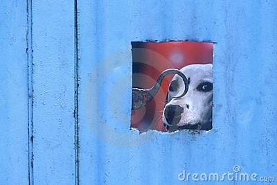Dog looking out through gate