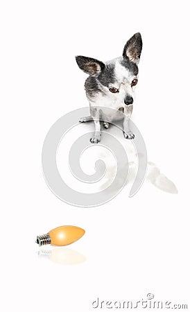 Dog looking at product