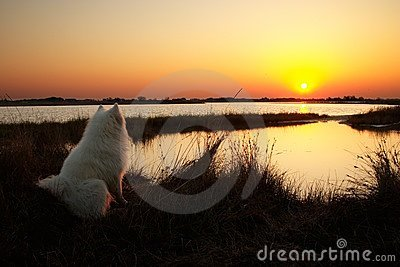 Dog looking on the sunrise