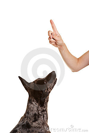 Dog looking up to index finger